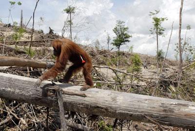 globalisierung palmöl